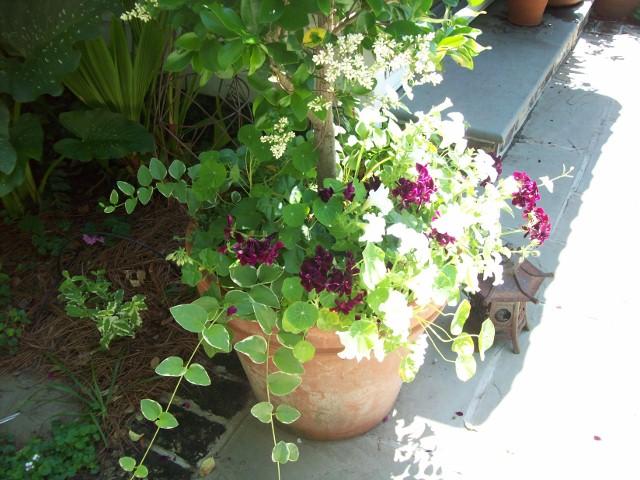 PlantsLove1