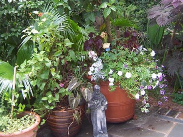 PlantsLove12a