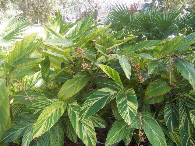 PlantsLove19