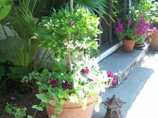 PlantsLove2a