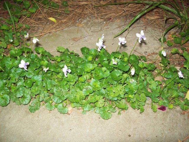PlantsLove3