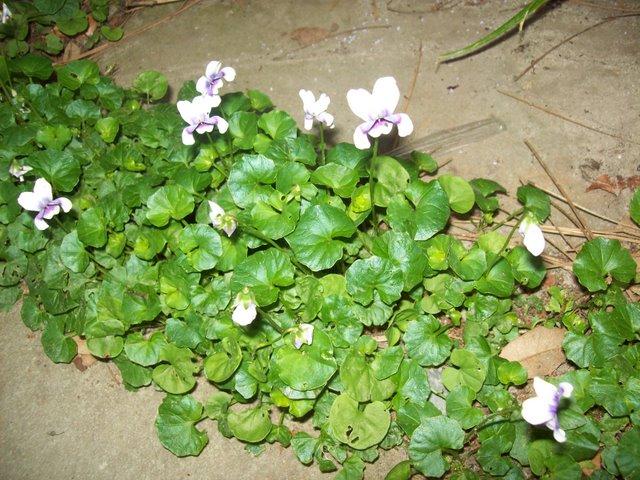 PlantsLove5